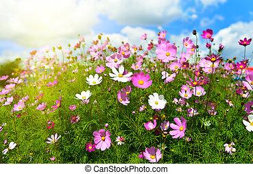 lentebloemen, weide