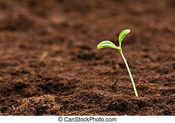 leven, concept, illustreren, kiemplant, groene, nieuw