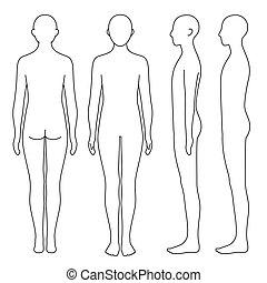 lichaam, menselijk, schets, bovenkant, back, voorkant
