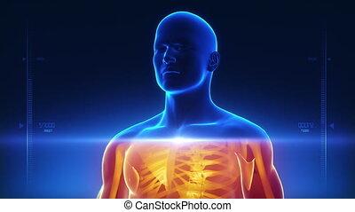 lichaam, rontgen, scanderen, medisch
