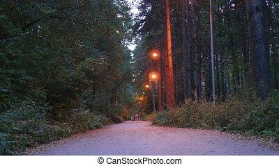 lichten, avond, park, gezin, wandelingen