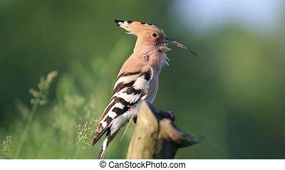 lied, mooi, vogel, lente, wild, zingt