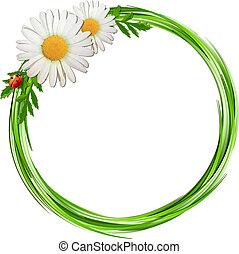 lieveheersbeest, frame, bloemen, gras, madeliefje