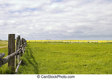 lijn, prairie, -, landscape, omheining