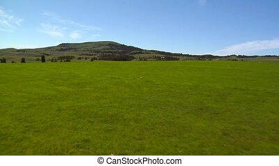 looppas, grassig, velden, eenzaam, groene, coyote, door