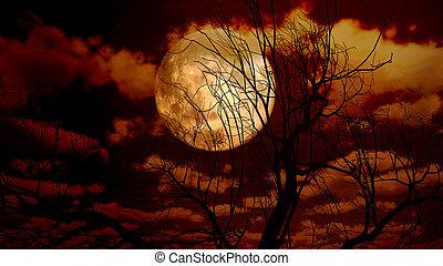 maan, boompje, nacht