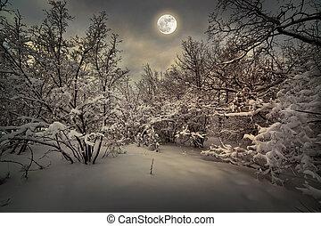 maanlicht, hout, winter, nacht