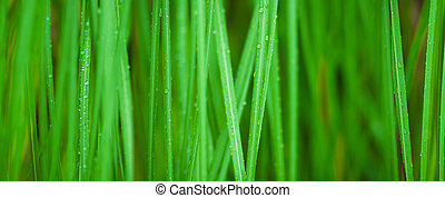 macro, gras, groene achtergrond