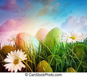 madeliefjes, eitjes, regenboog, hemel, kleur, gras, groot