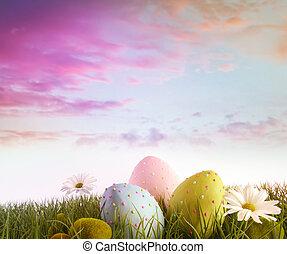 madeliefjes, eitjes, regenboog, hemel, kleur, gras