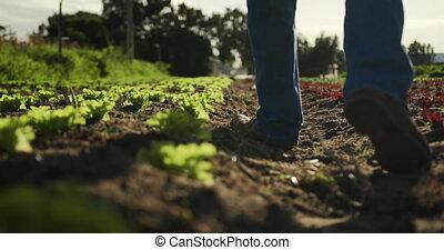 man, middelbare leeftijd , werkende , boerderij
