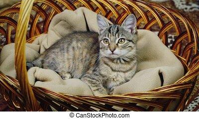 mand, katje, zittende