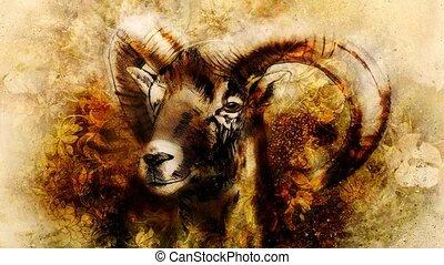 mannelijke , tekening, wilde bloem, schaap, achtergrond., machtig, horns
