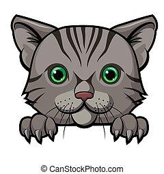 mascotte, spotprent, ontwerp, schattig, kat, hoofd