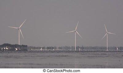 meer, tegen, generators, achtergrond, vogels, wind