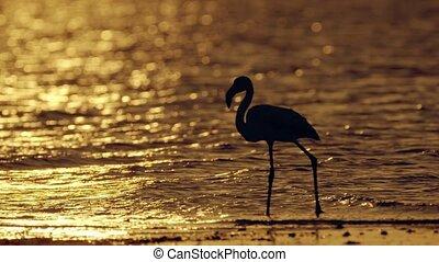 meer, zout, flamingo's, ondergaande zon , waden, cyprus, water, larnaca