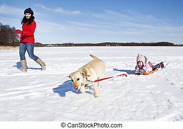 meisje, hond sledding