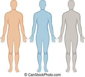 menselijk, drie, lichaam, kleuren, schets