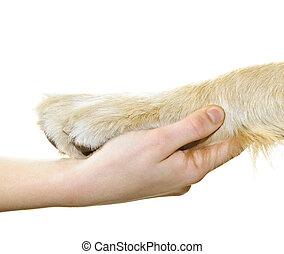 menselijke hand, dog, vasthouden, poot