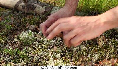 minuscuul, paddenstoel