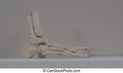model, verminderde, been beent uit, menselijk