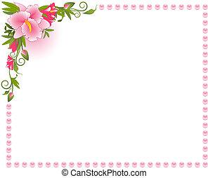 mooi, achtergrond, orchidee