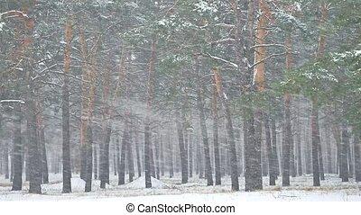 mooi, avond, winter, blizzard, natuur, boompje, sneeuwval, laat, kerstmis, landscape