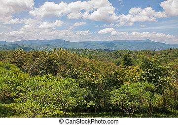 mooi, berg, groen landschap, bomen