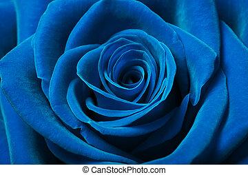 mooi, blauwe roos