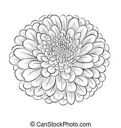 mooi, bloem, vrijstaand, zwarte achtergrond, monochroom, witte