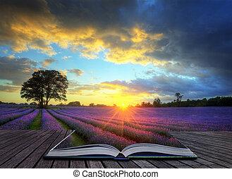 mooi, concept, atmosferisch, rijp, vibrant, platteland, velden, beeld, hemel, lavendel, creatief, verbazend, ondergaande zon , engelse , wolken, op, landscape