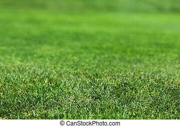 mooi, gras, groene, textuur