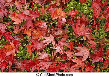 mooi, herfst, herfst, scène, bos
