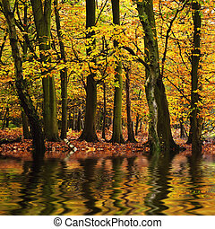 mooi, herfst, seizoen, herfst, weerspiegelde, n, waterkleuren, bos, vibrant, landscape
