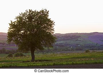 mooi, lente, afgelegen, dorp, heuvels, achtergrond., concept., akker, harmonie, vredig, ondergaande zon , beauty, natuur, groot, tussen, groeiende, alleen, boompje, stille , groene, kleine, tuinen, aanzicht