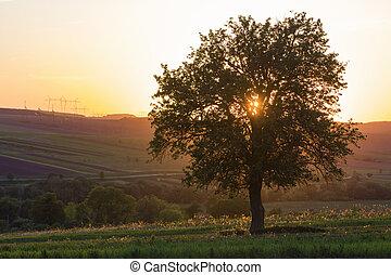 mooi, lente, hoog, afgelegen, spanning, heuvels, akker, zonlicht, achtergrond., vredig, sinaasappel, ondergaande zon , avond, groot, alleen, stretching, boompje, stille , gebaad, groene, horizon, groeiende, lijnen, aanzicht