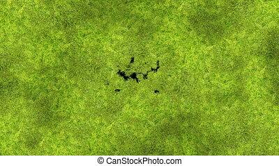 mooi, nuttig, proces, lente, animation., transitions., concept., matte., 3840x2160, nieuw leven, natuur, scherm, mos, alfa, hd, ultra, bedekking, groene, 4k, groeiende, gras