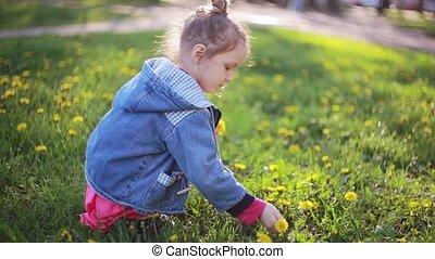 mooi, schattig, weinig; niet zo(veel), mooi, bouquetten, zonnig, day., flowers., paardebloemen, kies, vervaardiging, meisje, dame, best