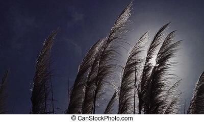 mooi, slingeren, hemel, zonnig, tegen, stunningly, schoonmaken, veer, gras, wind