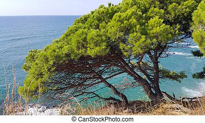 mooi, voorgrond, groene, pijnbomen, zeezicht
