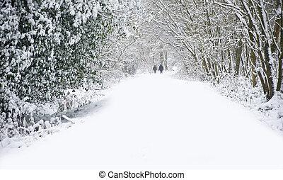 mooi, wandelende, winter, gezin, sneeuw, diep, scène, maagd, bos, walkway, steegjes, honden