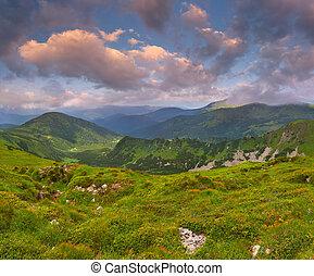 mooi, zomer, bergen., landscape, zonopkomst