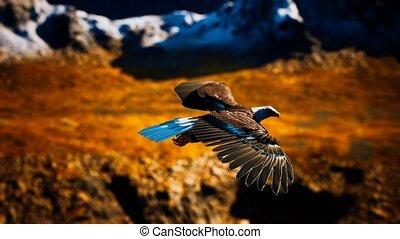 motie, adelaar, amerikaan, bergen, vertragen, vlucht, alaskan, kaal, op