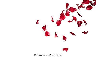 motie, roos, het vallen, vertragen, kroonbladen