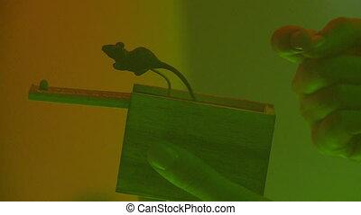 mouse., doosje, halloween