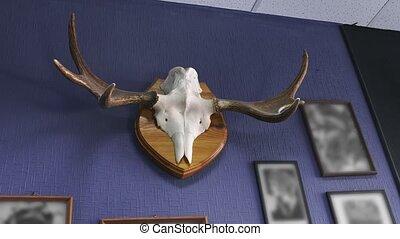 muur, video, hangend, horns, eland