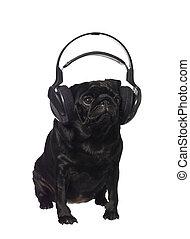 muziek, pug, black , het luisteren