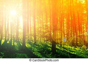 mystiek, kleurrijke, zon, morgen, bos, straal