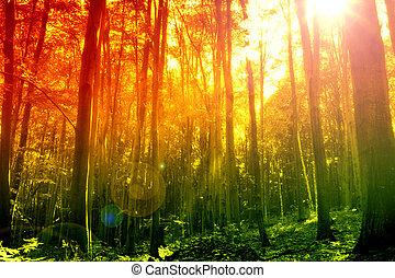 mystiek, straal, zon, bos