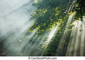 mystiek, stralen, zonlicht, bomen